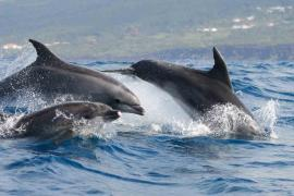 Dolphin watchign holidays in Sri Lanka